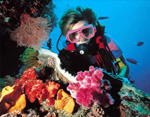 Photo: Scuba Diving the Great Barrier Reef