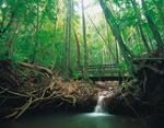 Photo: Dunk Island rainforest walk