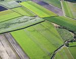 Mackay cane fields