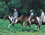 Photo: Blazing Saddles Horse Riding